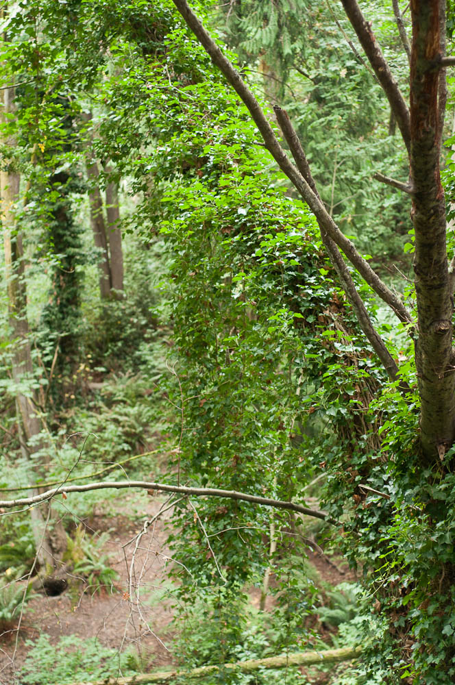 Native goundcovers don't invade the woods like invasive ivy