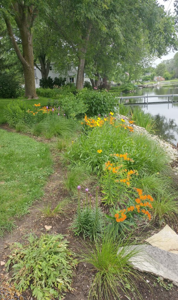 Prairie Dropseed and early Summer blooms of perennial plug planting