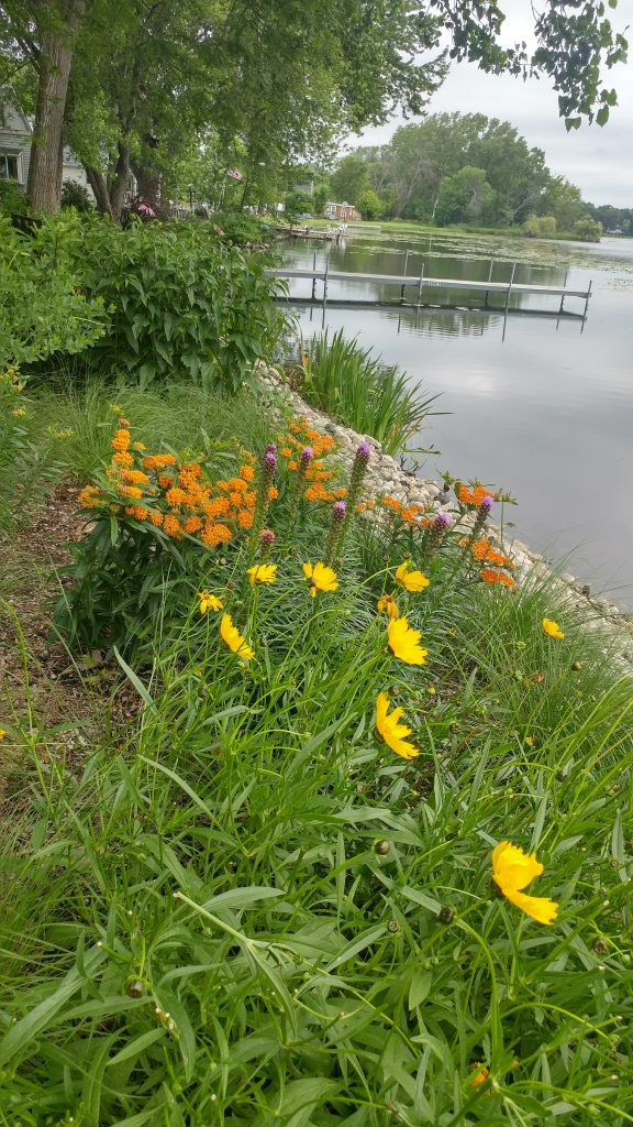Lanceleaf Coreopsis and Butterfly Weed