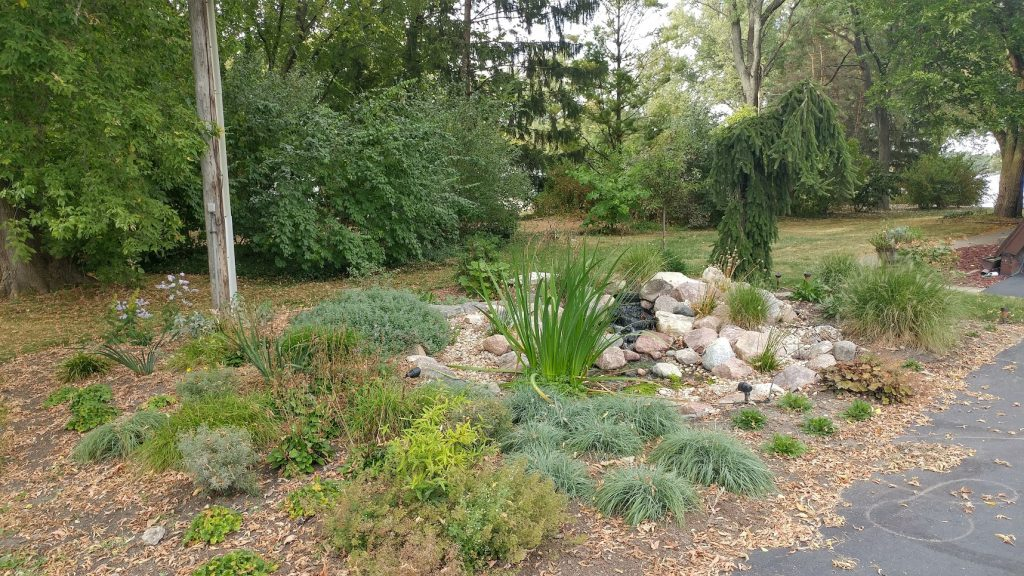 Pondless Waterfall Renovation Phase two plantings