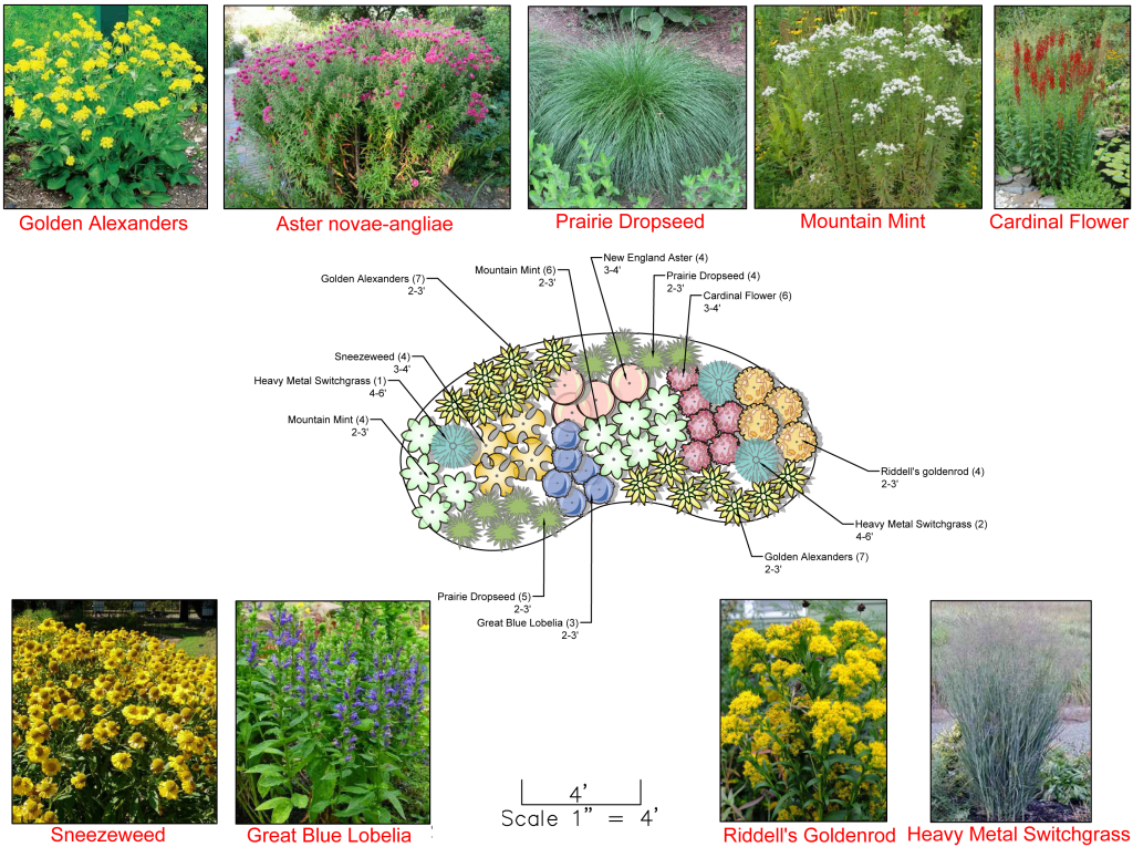 Rain Garden for a Sunny Site on sculpture garden plan view, permeable paving plan view, swale plan view, detention basin plan view, green roof plan view, kitchen garden plan view, mulch plan view, rain fall view, japanese garden plan view, landscape plan view, hardscape plan view, vegetable garden plan view, joe pye weed plan view, rain gardens and bioswales, sycamore plan view, flower garden plan view, community garden plan view,