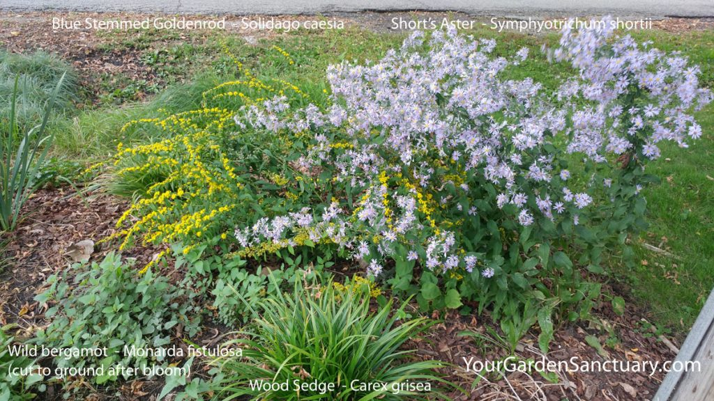 Landscaping for your grandchildren - Goldenrod and Aster