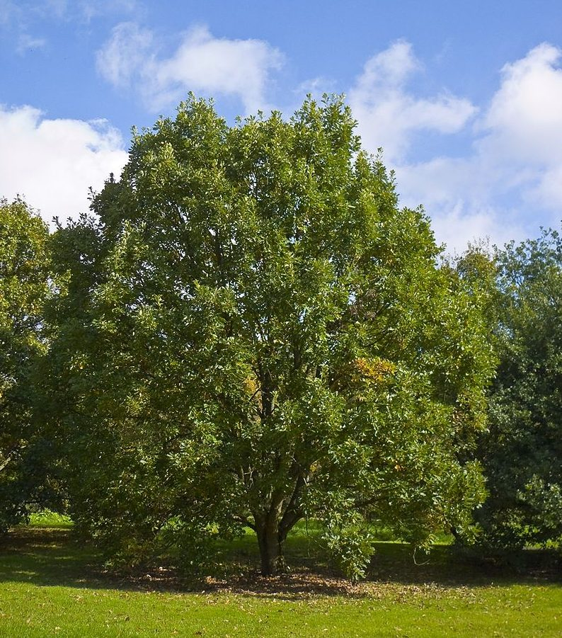 Trees for wet areas and poorly drained soils