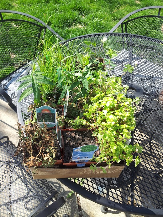 Native plant sale plants
